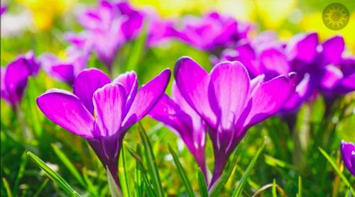Recap---Ferment---1-Flowers
