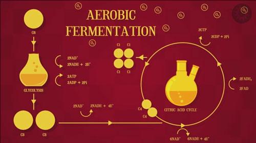 Recap---Ferment---4-Chemistry-again