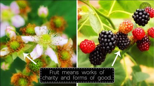 recap_fruit
